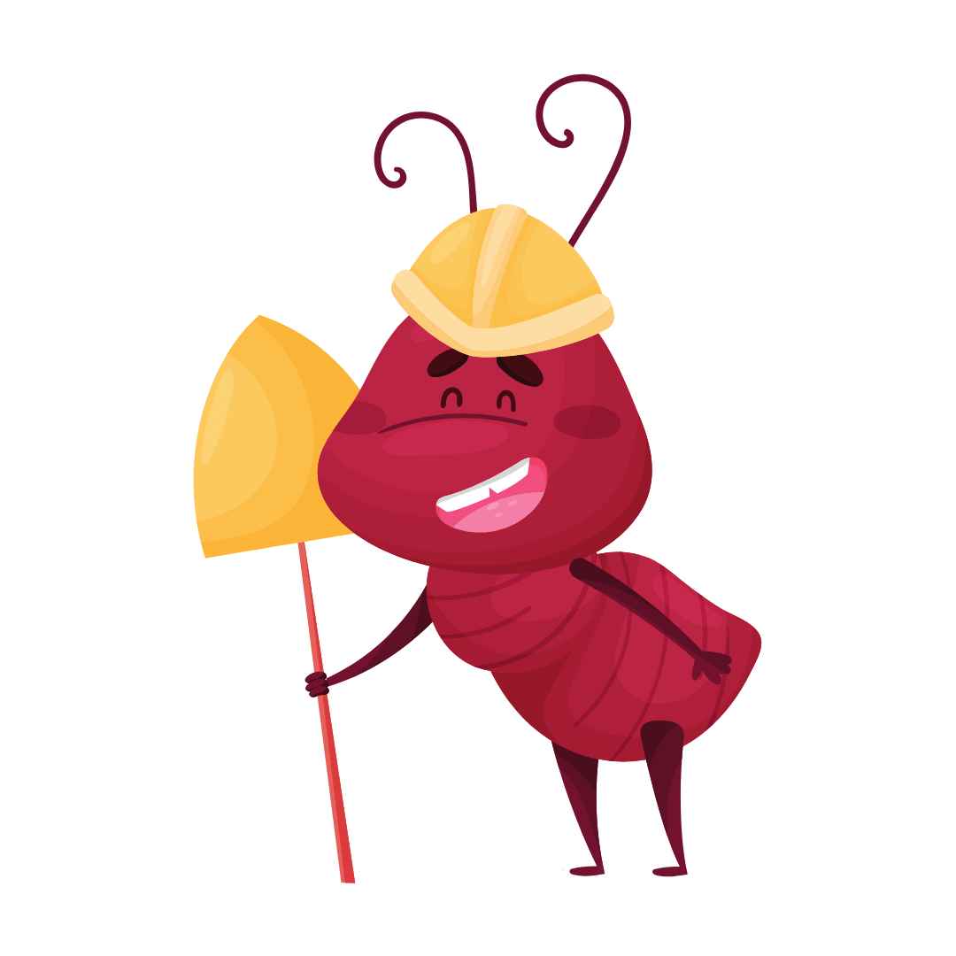 Termite Control Ashgrove