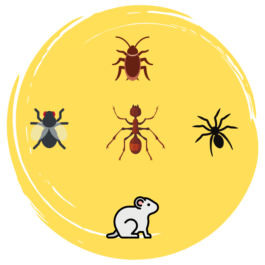All Types Of Pest Control